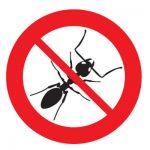 ants in hot water heater